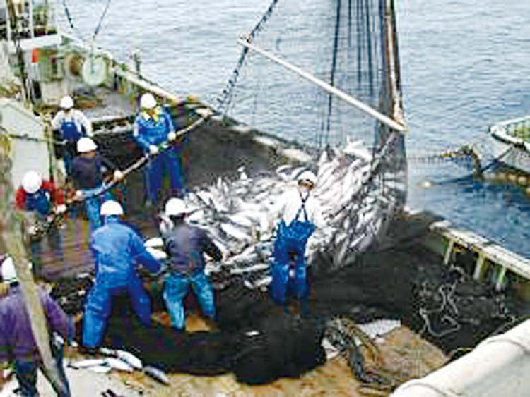 三陸沖の好漁場でカツオを漁獲するまき網漁船 水産庁/三陸沖の好漁場でカツオを漁獲するまき網漁船
