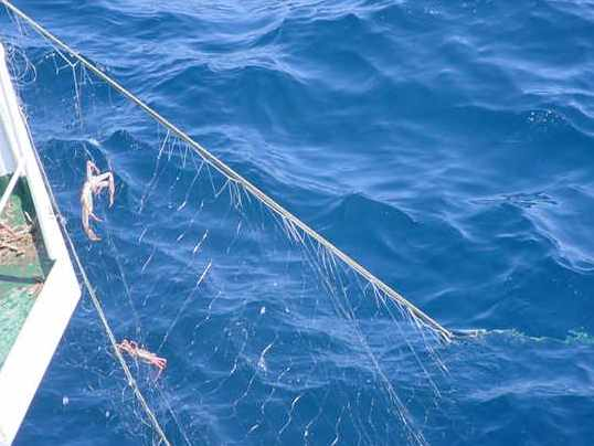 底刺網漁具の写真