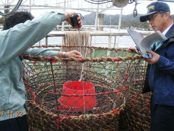 ズワイガニの出漁前検査の写真